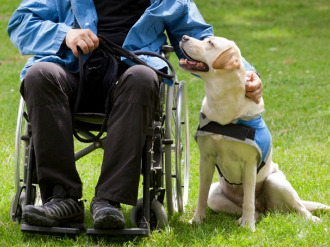 gossos assitència persones discapacitat